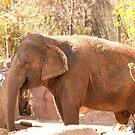 Elephant by Misti Love