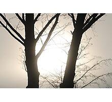 Nature Frames the Sunrise Photographic Print