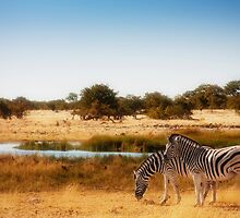 Do zebra dream? by Owed to Nature