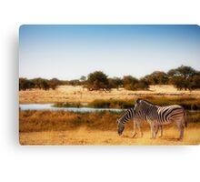 Do zebra dream? Canvas Print