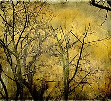 Beautiful  trees ©  by Dawn M. Becker