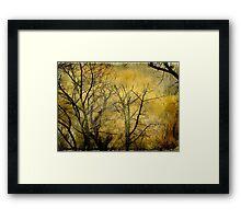 Beautiful  trees ©  Framed Print