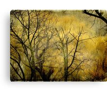 Beautiful  trees ©  Canvas Print