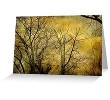 Beautiful  trees ©  Greeting Card