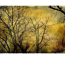 Beautiful  trees ©  Photographic Print
