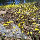 yellow meadow by Jimmy Joe