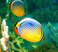 Redfin Butterfly Fish by Robbie Labanowski