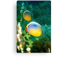 Redfin Butterfly Fish Canvas Print