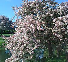 Blossom like candyfloss by Lorna81