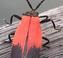 Jungle Bug by justineb