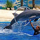 Dolphin - Jumping Dolphin at the Aquarium by Calin Lapugean