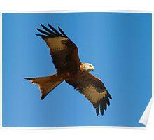 Red Kite 1 Poster