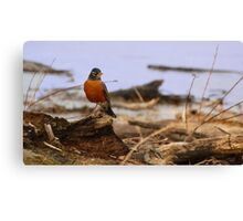 Spring Roost Canvas Print