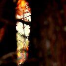 Talladega Forrest : peek  by Isa Rodriguez
