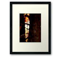 Talladega Forrest : peek  Framed Print