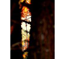 Talladega Forrest : peek  Photographic Print