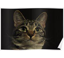 Curious Feline Poster