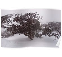 Majestic Snowgum - Feathertop Poster