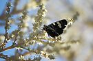Butterfly on Yellow by yolanda