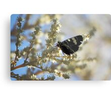 Butterfly on Yellow Metal Print