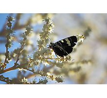 Butterfly on Yellow Photographic Print