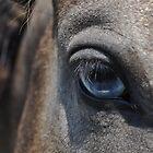 Blue Eyed Horse by Savannah Gibbs