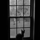 Cat in the window- black and white by xtalline