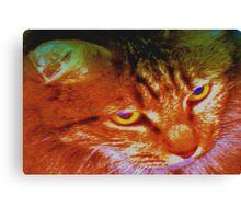 Persian tabby cat Canvas Print