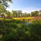 Hoosier Prairie State Nature Preserve by Curtiss Simpson