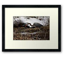 Blue Heron Hunting Framed Print