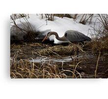 Blue Heron Hunting Canvas Print