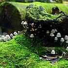 Mushroom Village by Brett Williams