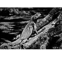 Treeclimber Photographic Print