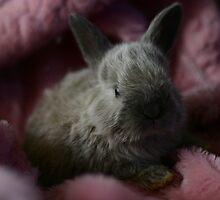 Little Blue Bunny by dreameyce