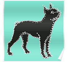 Connect The Boston Terrier  Dots Poster