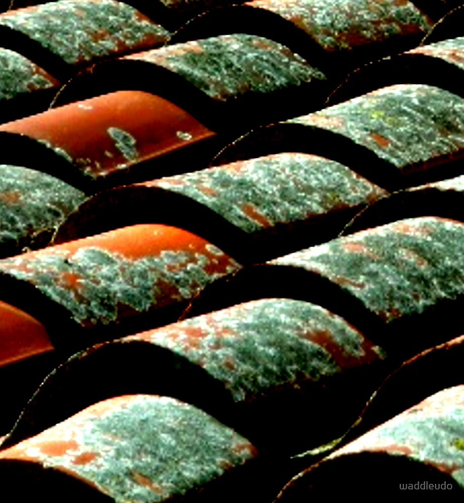 """""""ROOF TILES - EXAGGERATED"""" by waddleudo"""