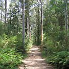 Blue Gum Swamp Track, Springwood by Steve Callaghan