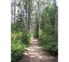 Blue Gum Swamp Track, Springwood Photographic Print