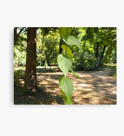 Selective focus on a young branch of a tree with leaves Canvas Print