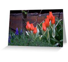 Three Bulbs - Eleven Tulips Greeting Card