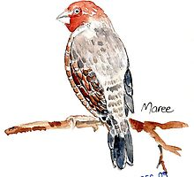 Red-headed Finch (Rooikop Vink) by Maree  Clarkson
