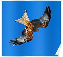 Red Kite 2 Poster