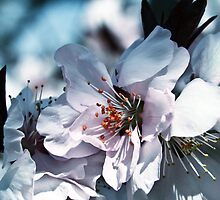 Spring is here by in2ition