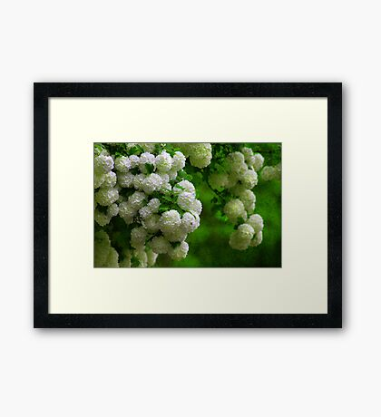 Textured Flora (New) Framed Print