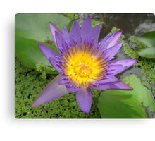 In Blossom Canvas Print