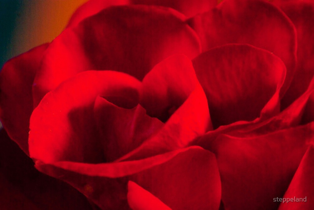 Satin-red rose petals by steppeland