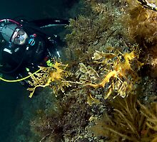 Dive Bud with two Leafy Seadragons by Deb Aston