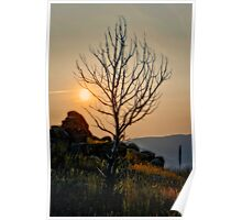 Butte Montana - Sunrise Lighting My Branches Poster