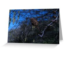Willow Buds in Blue Greeting Card