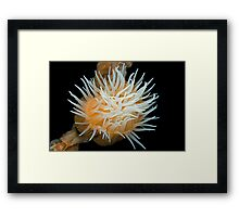 Animals like a flower Framed Print